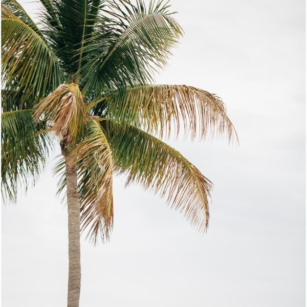 Vacation Jackson Style | Myrtle Beach to Sanibel Island